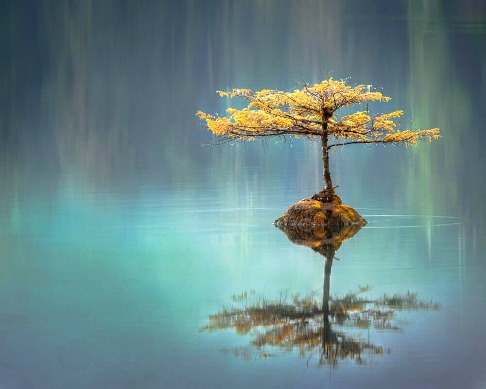 Tree in a lake to reflect